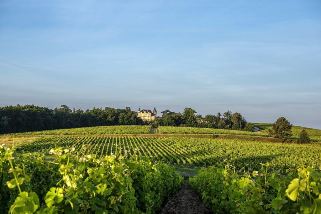 Vue vignoble Sauternes